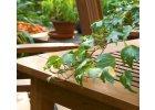 Přírodní laky na dřevo