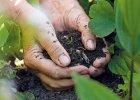 Pôdne hnojivo