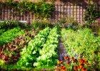 Zeleninové záhrady