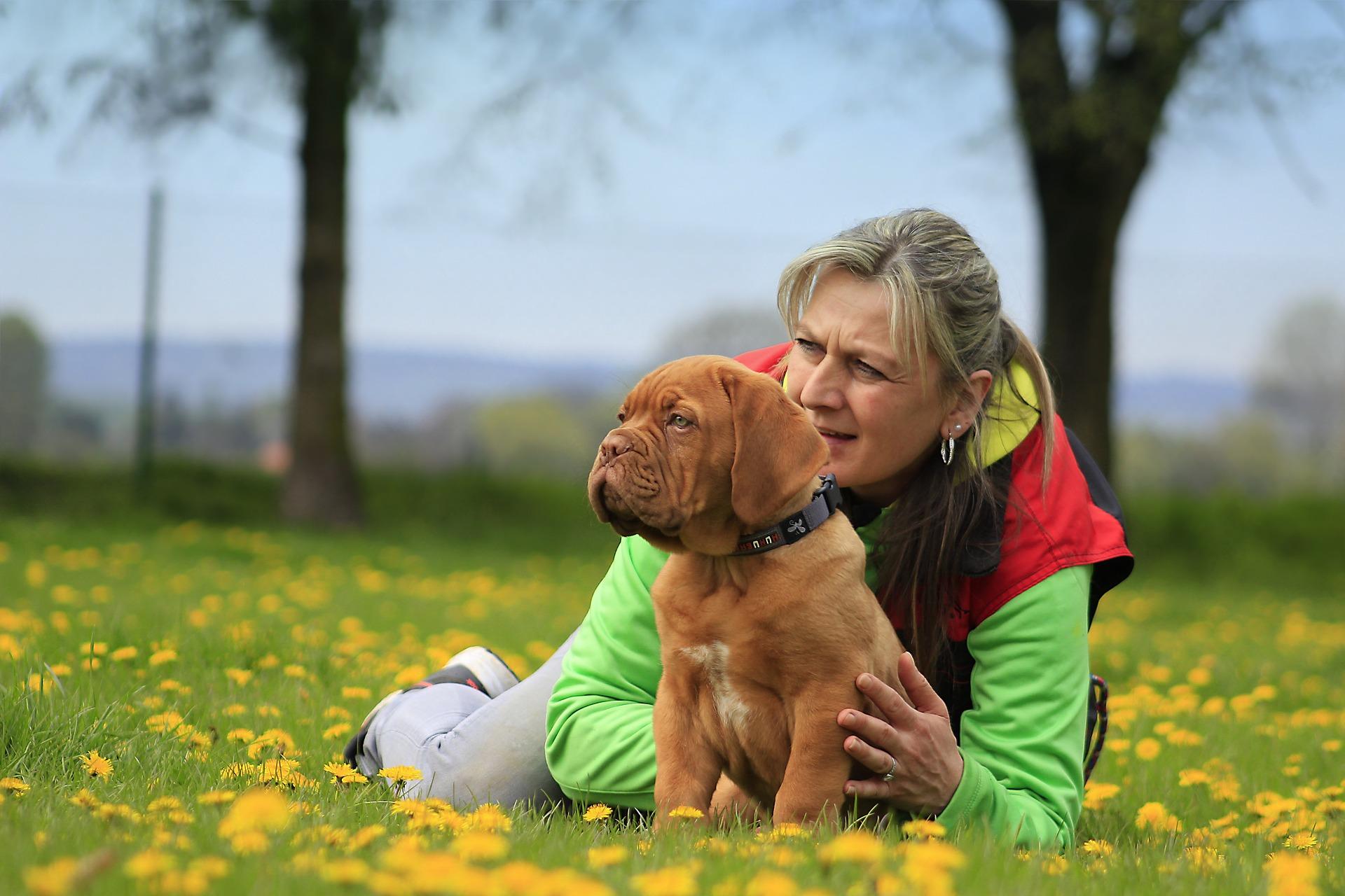 Projednávaný návrh zákona o některých právech osob se zdravotním postižením, které využívají doprovodu psa se speciálním výcvikem