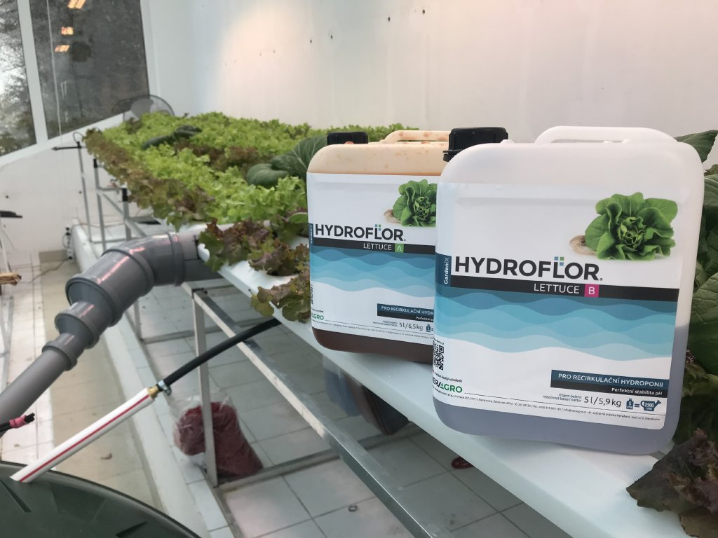 Hydroflor Lettuce A+B