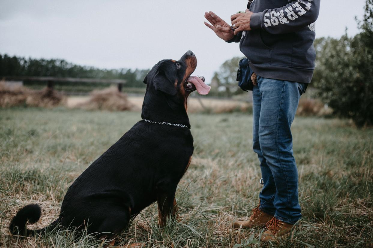 Odbourání zlozvyků psů – jako klíč je zapotřebí respekt, pevná vůle a trpělivost.