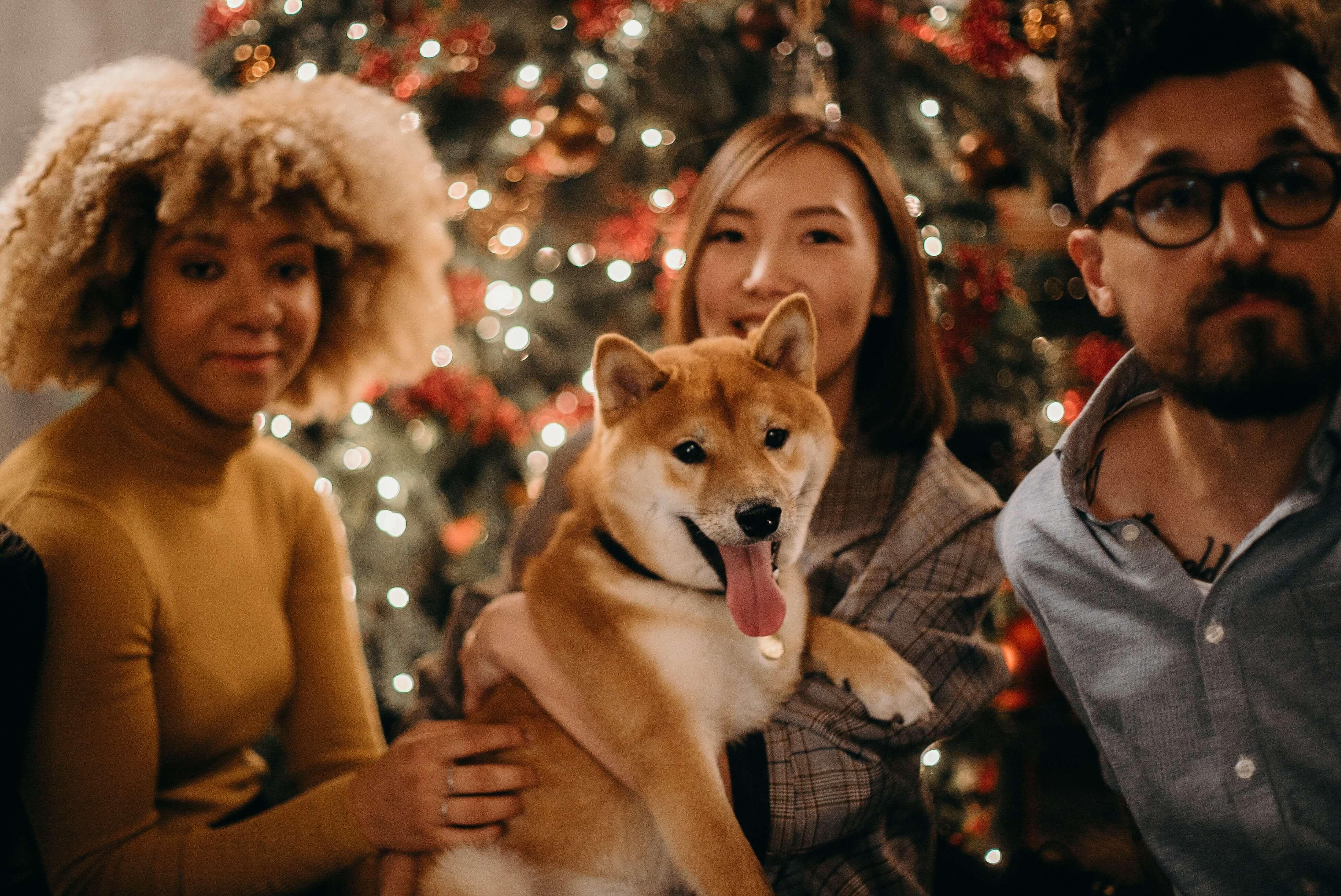 Vánoce a chlupatí kamarádi