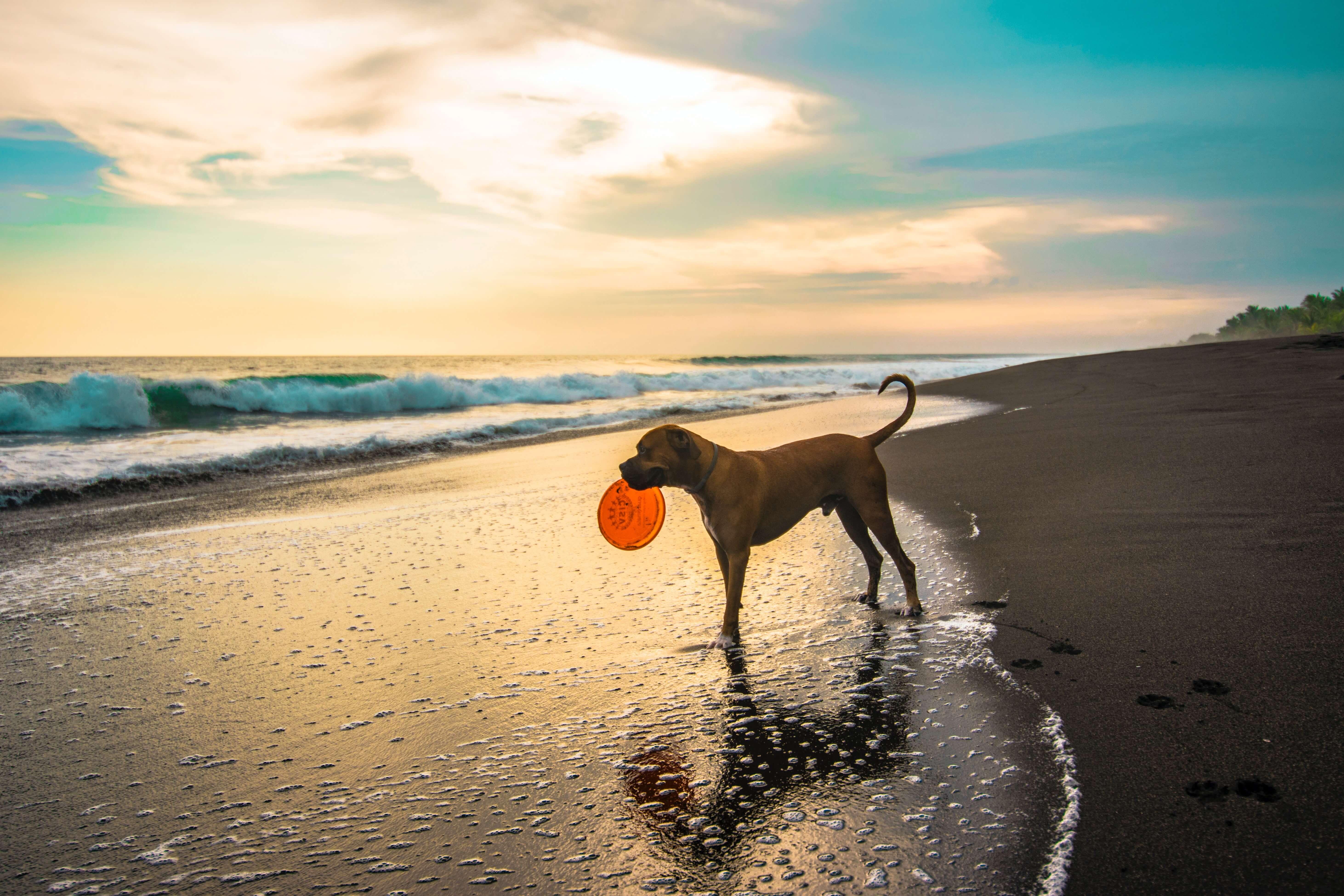 Jak zabavit našeho psa na dovolené?