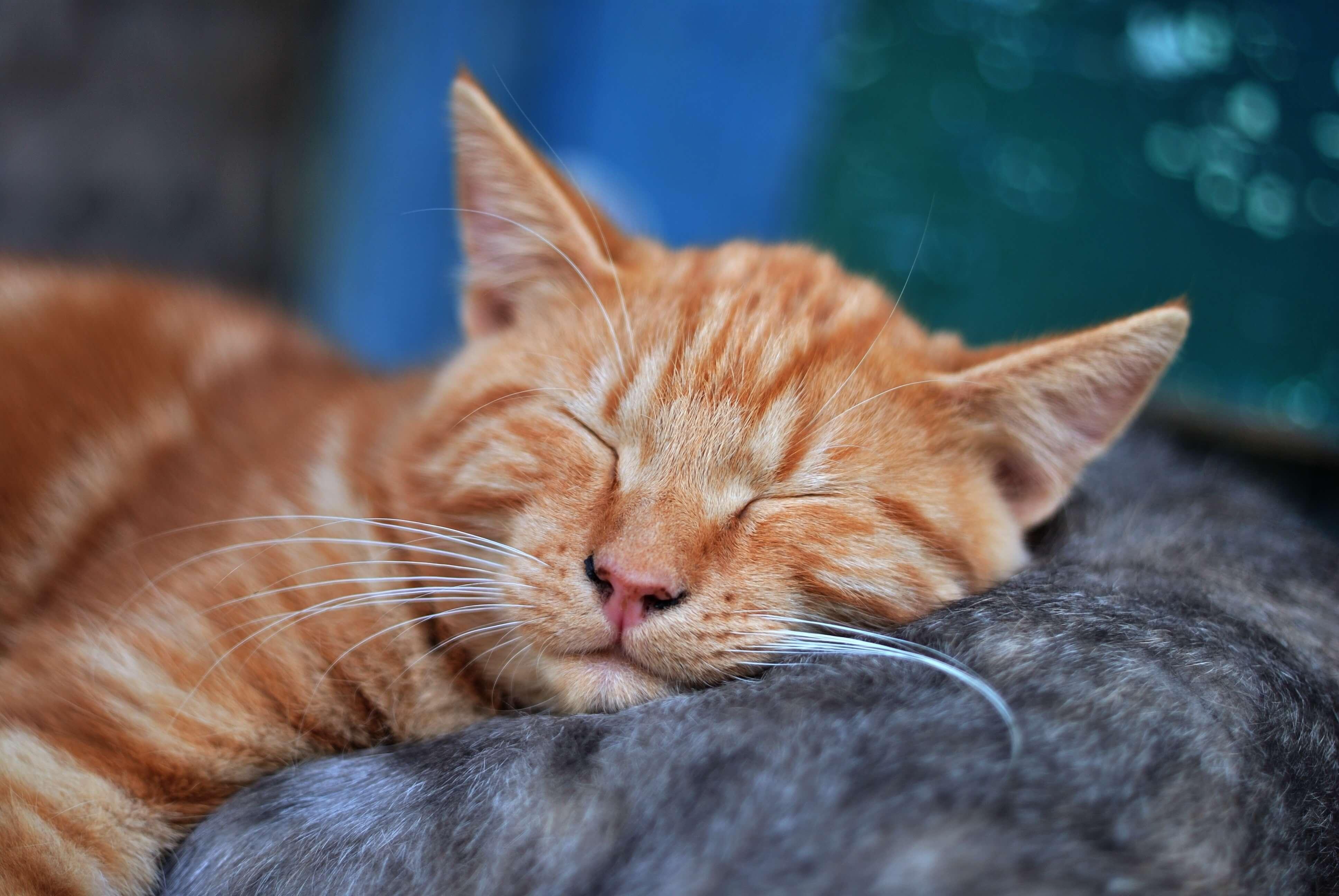 Jak dlouhou dobu může být kočka sama doma?