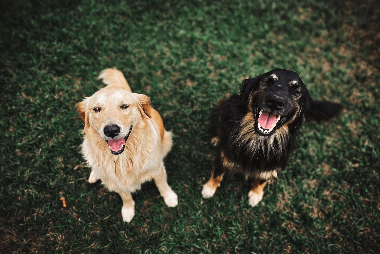 Psí mistři a hrdinové, psí zajímavosti!