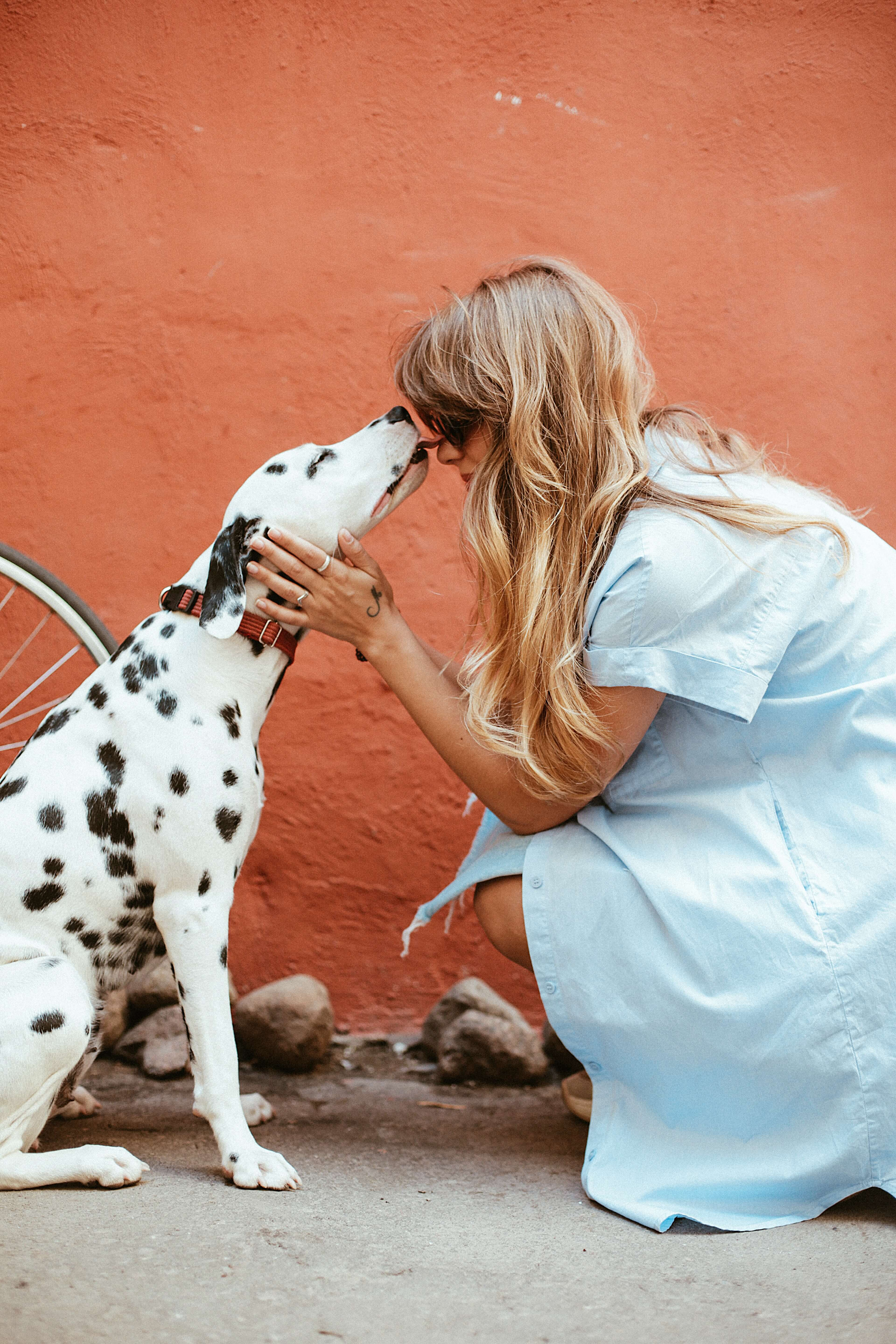 adult-black-and-white-dalmatian-licking-face-of-woman-1389994 (1)