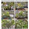 pestovani papriky indoor osvetleni grow led cz