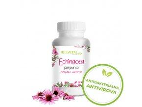 hillvital echinacea antibakterialna antivirova sk