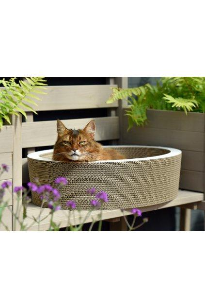 cat on ovale katzenschale lovale katzenkoerbe 03 800x600px