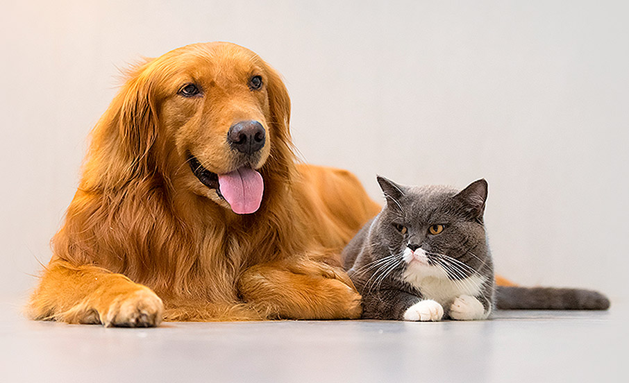 Kĺbová výživa pre psy a mačky