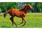 Kĺbová výživa pre kone a poníky
