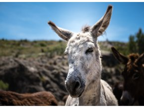donkey 3118564 1920