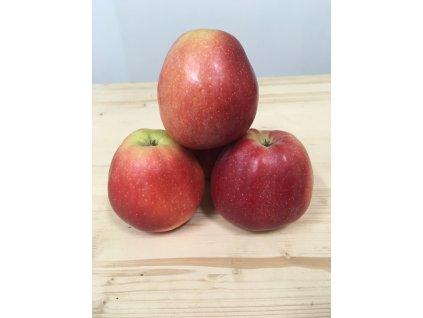 Jablka Gloster