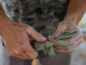 pestovani bylinek babi leto workshop
