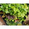 plant box vertikalni zahradka 7