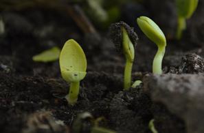 Ako využiť kompost?