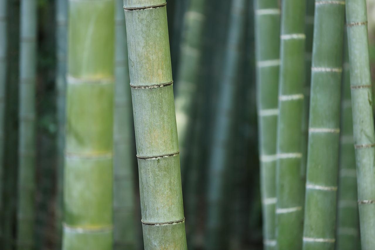 bamboo-919052_1280
