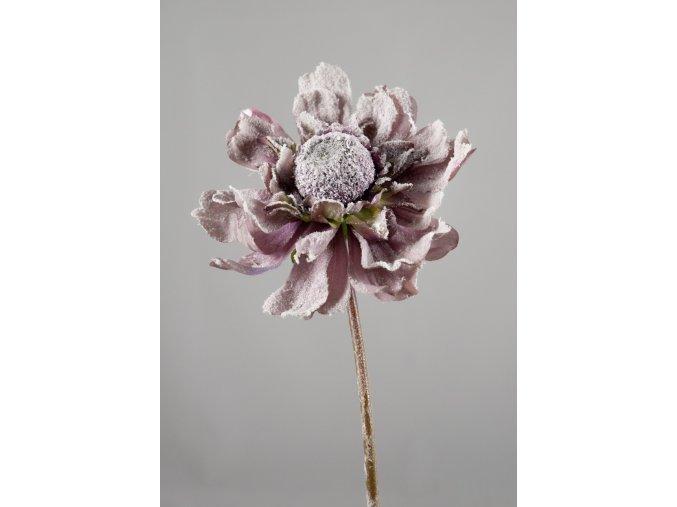 Gerbera fialová omrzlá 68 cm