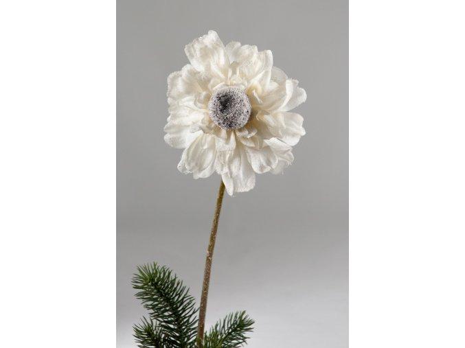 Gerbera bílá omrzlá 68 cm