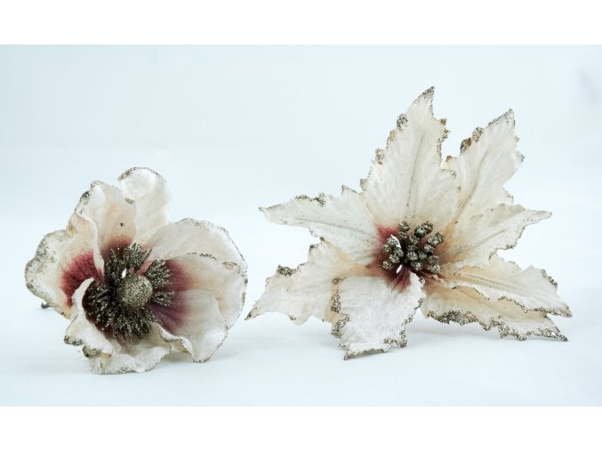 Set sametová magnolie a vánoční hvězda