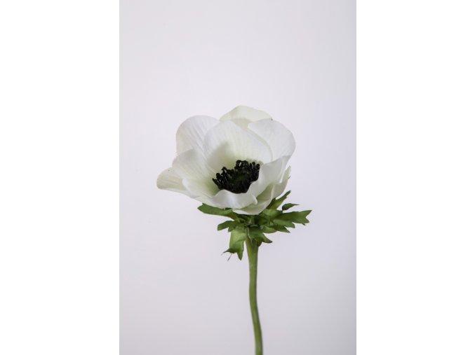 eshop tom anemone bílá