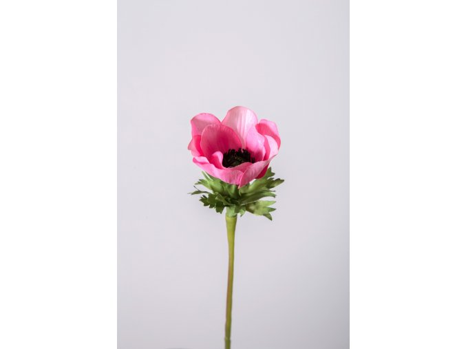 eshop tom anemone růžová