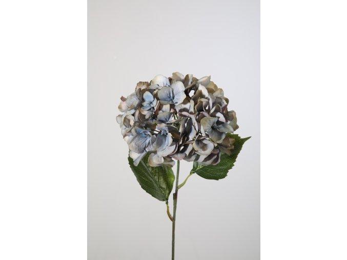 Hortenzie modrofialová 61 cm