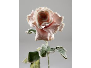 Růže omrzlá růžová 70 cm
