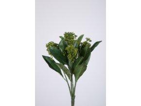 Skimmie zelená 30 cm
