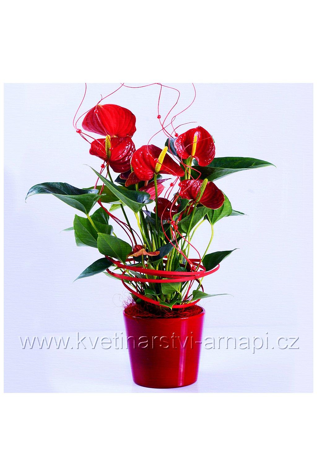 kvetiny hrnkove kvetinarstvi arnapi online