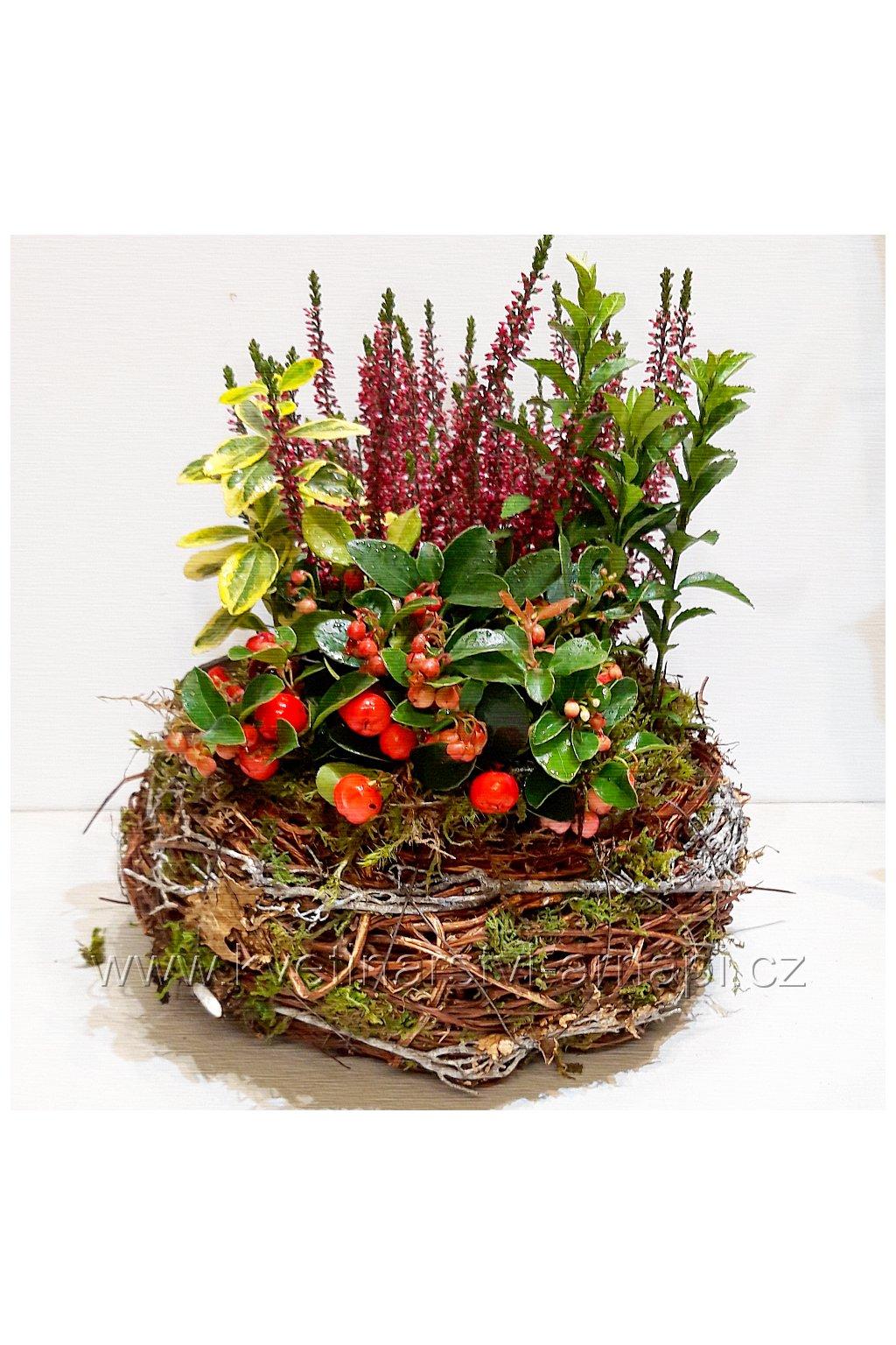 dnesni nabidka podzimni kvetiny rozvoz po praze kvetinarstvi arnapi