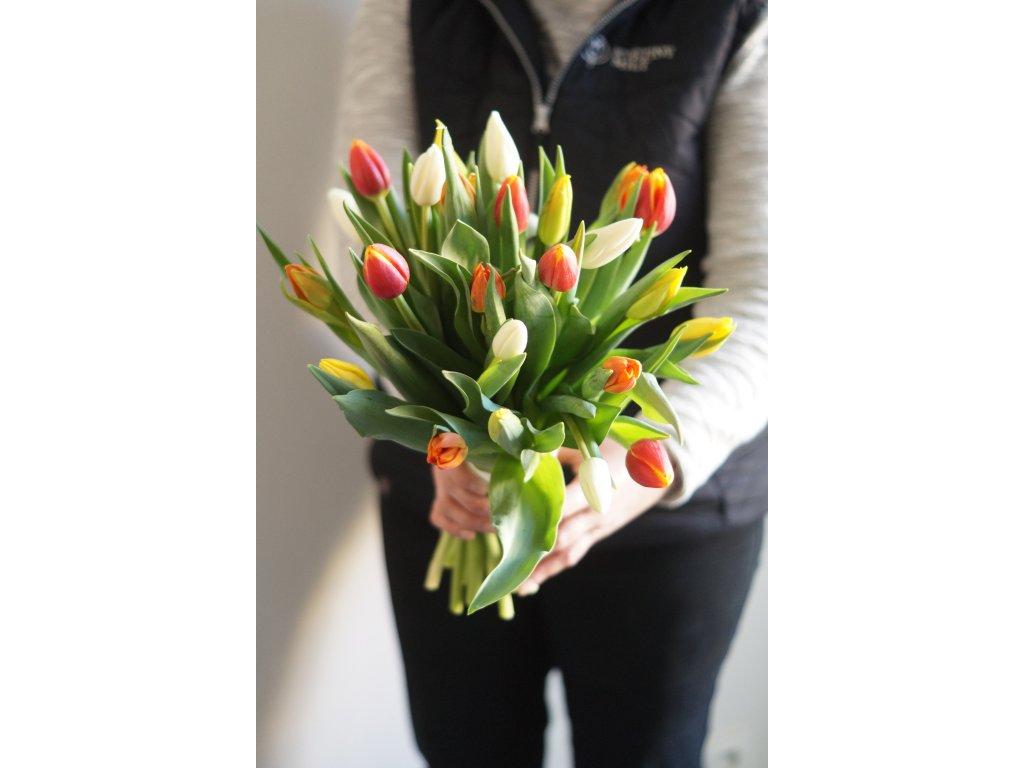 Mix Tulipánů