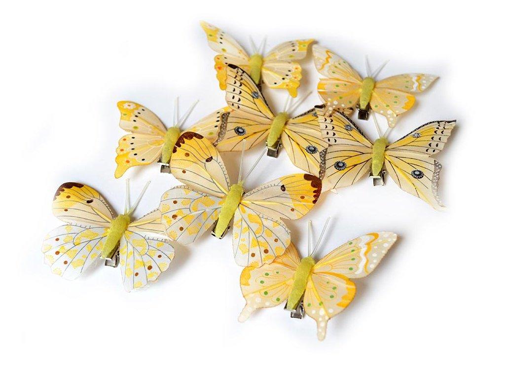 Motýlci na skřipci - žlutá