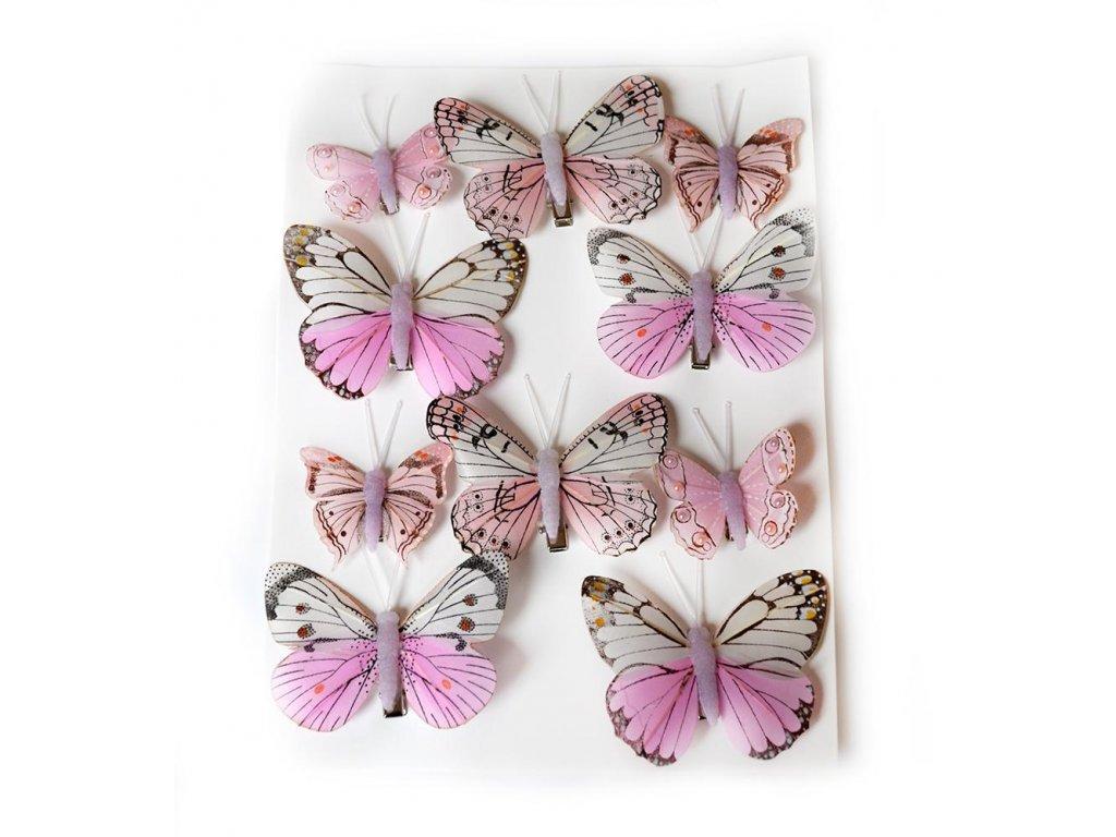 Motýlci na skřipci - růžová