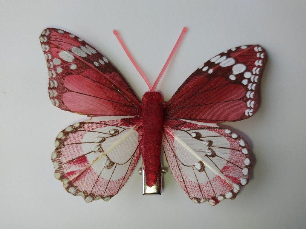 Motýlci na skřipci - syté barvy