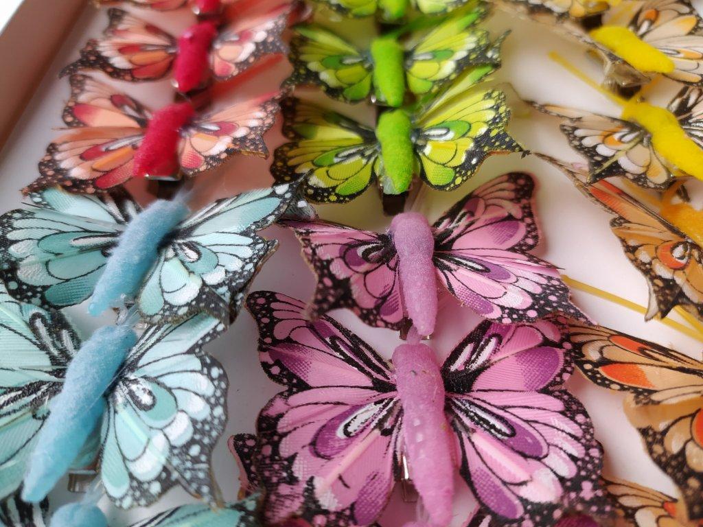 Motýlci na skřipci - mini