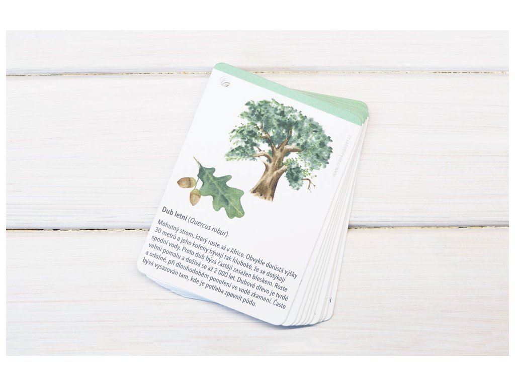 karticky stromy1