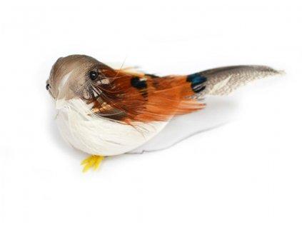 Ptáček Filípek