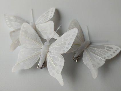 Motýlci na skřipci
