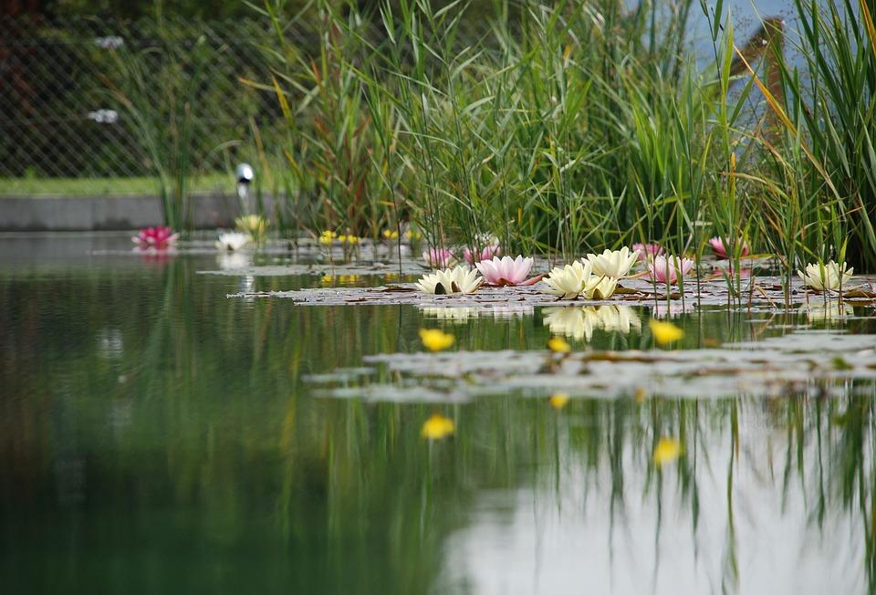 swimming-pond-1529485_960_720