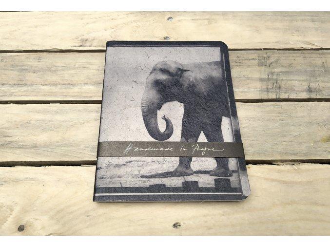 2019 10 Vano slon 3xs