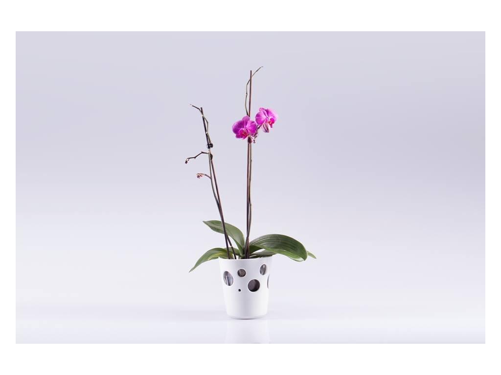 květináč na orchidej, obal na orchidej, orchidej, váza, váza na květiny, designová váza, bílá váza, dekorativní váza, vázy dekorace, moderní váza, porcelánová váza, bandaska, doplňky do interiéru, dekorace do bytu, bytové doplňky, designové doplňky, bytové doplňky eshop, moderní doplňky do bytu, luxusní bytové doplňky, dekorace do obýváku, český porcelán, porcelán, luckavo, Lucie Tomis, dárek, svatební dar