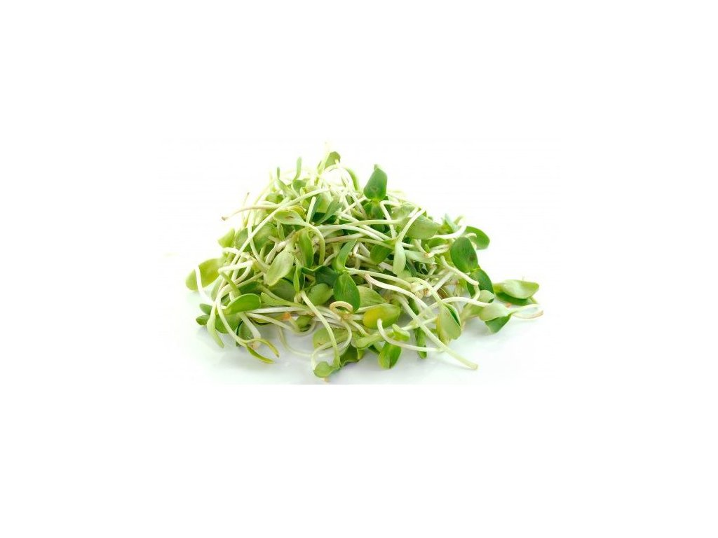 slnecnica-semienka-na-klicenie