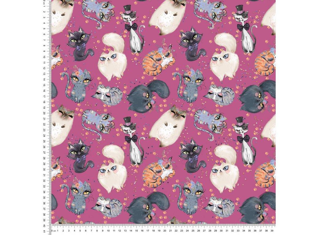 Y419 kočky v růžovém