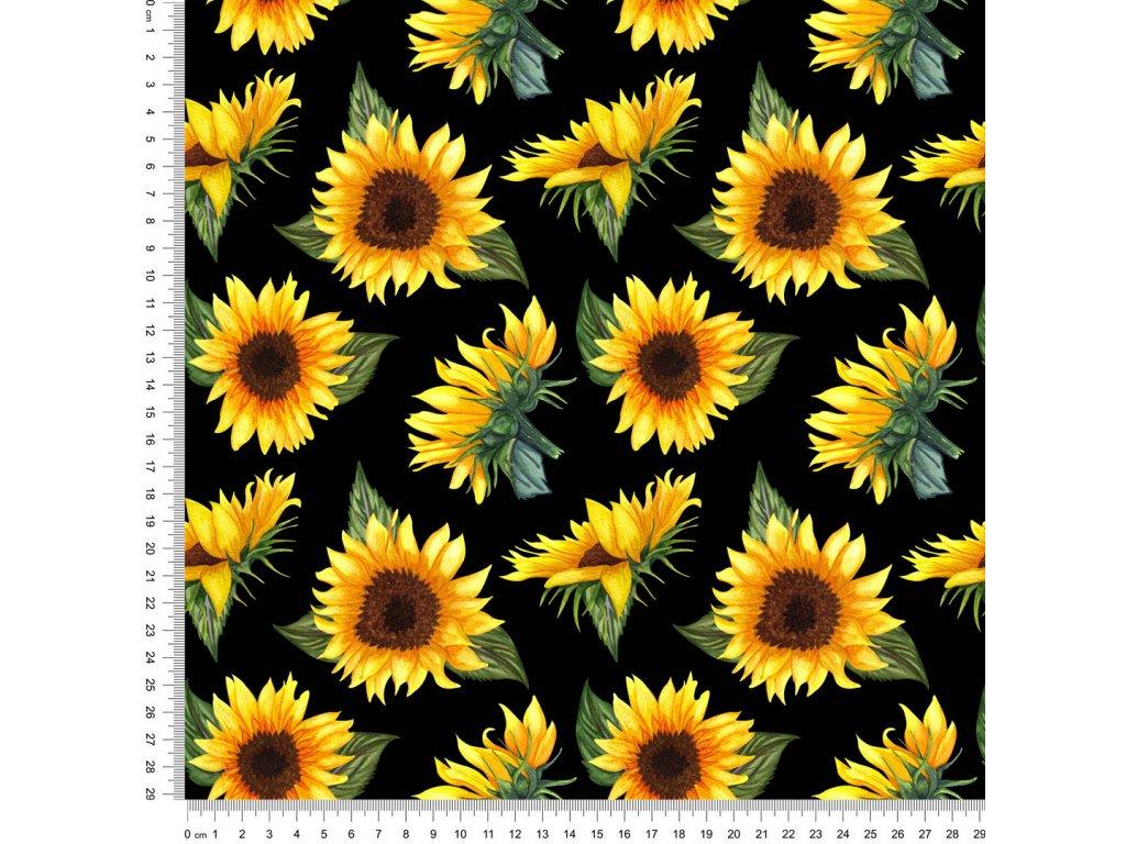 Y462 květy slunečnice