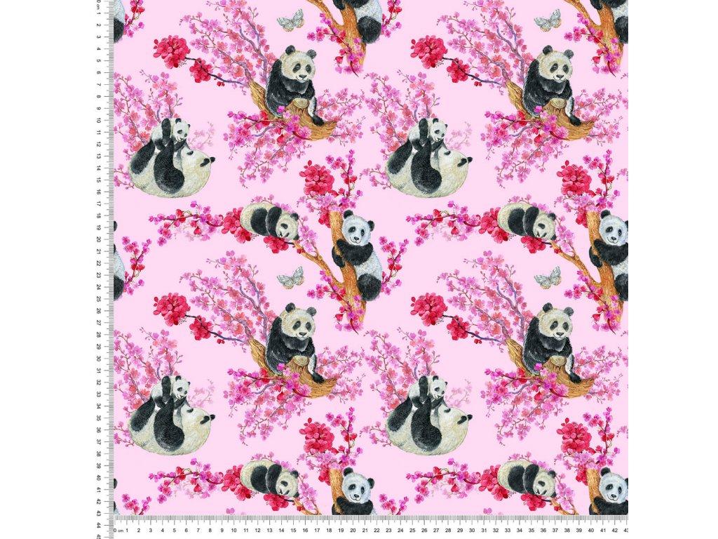 Y536 panda na stromě