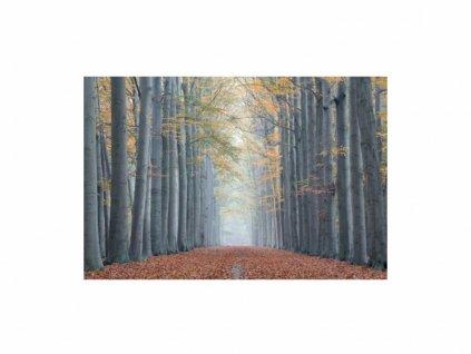 Obraz - Trees II 120x80