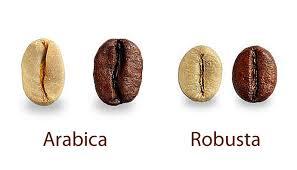 Jaký je rozdíl mezi arabicou a robustou?