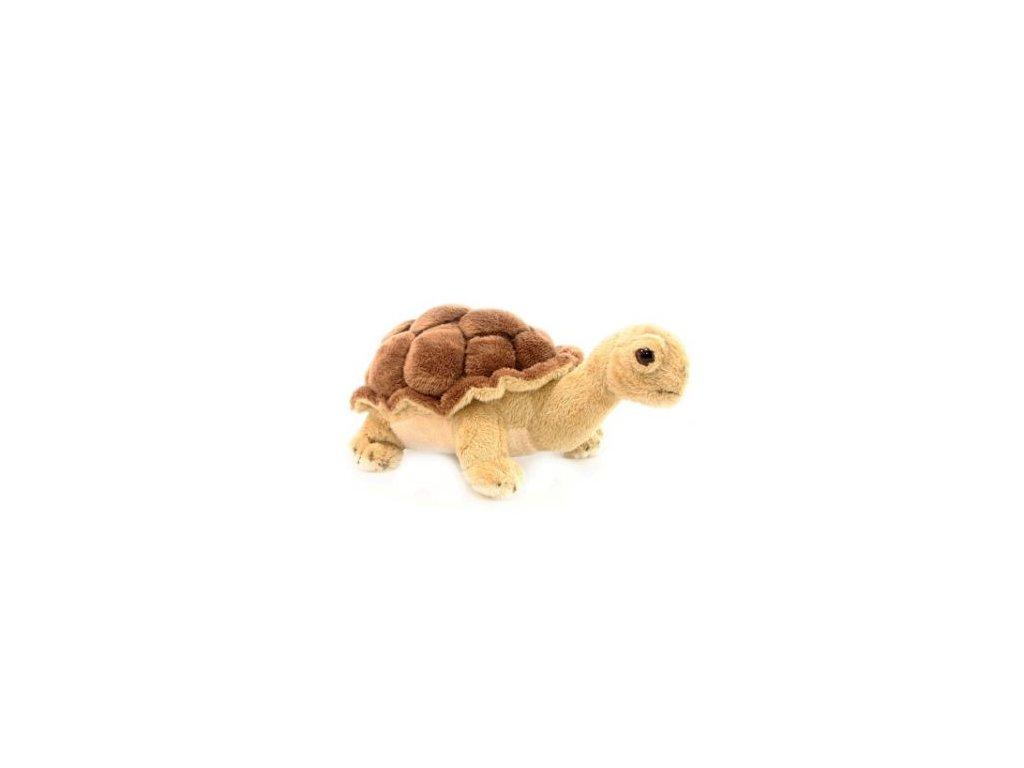 Oviraptor19cm